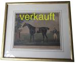 verkauft-pferdestich-diamond-jan16a